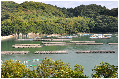 瀬越海産のカキ養殖場