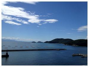 瀬越海産の牡蠣養殖場